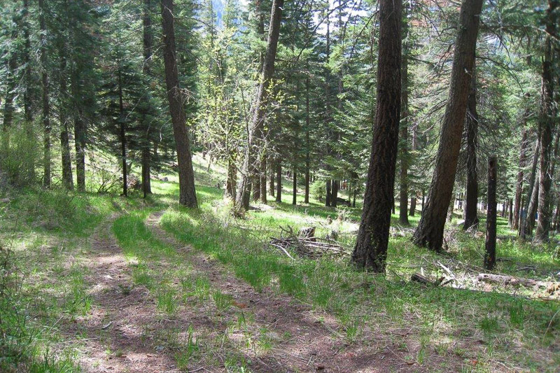 Rare Divideable Acreage near Wallowa Lake